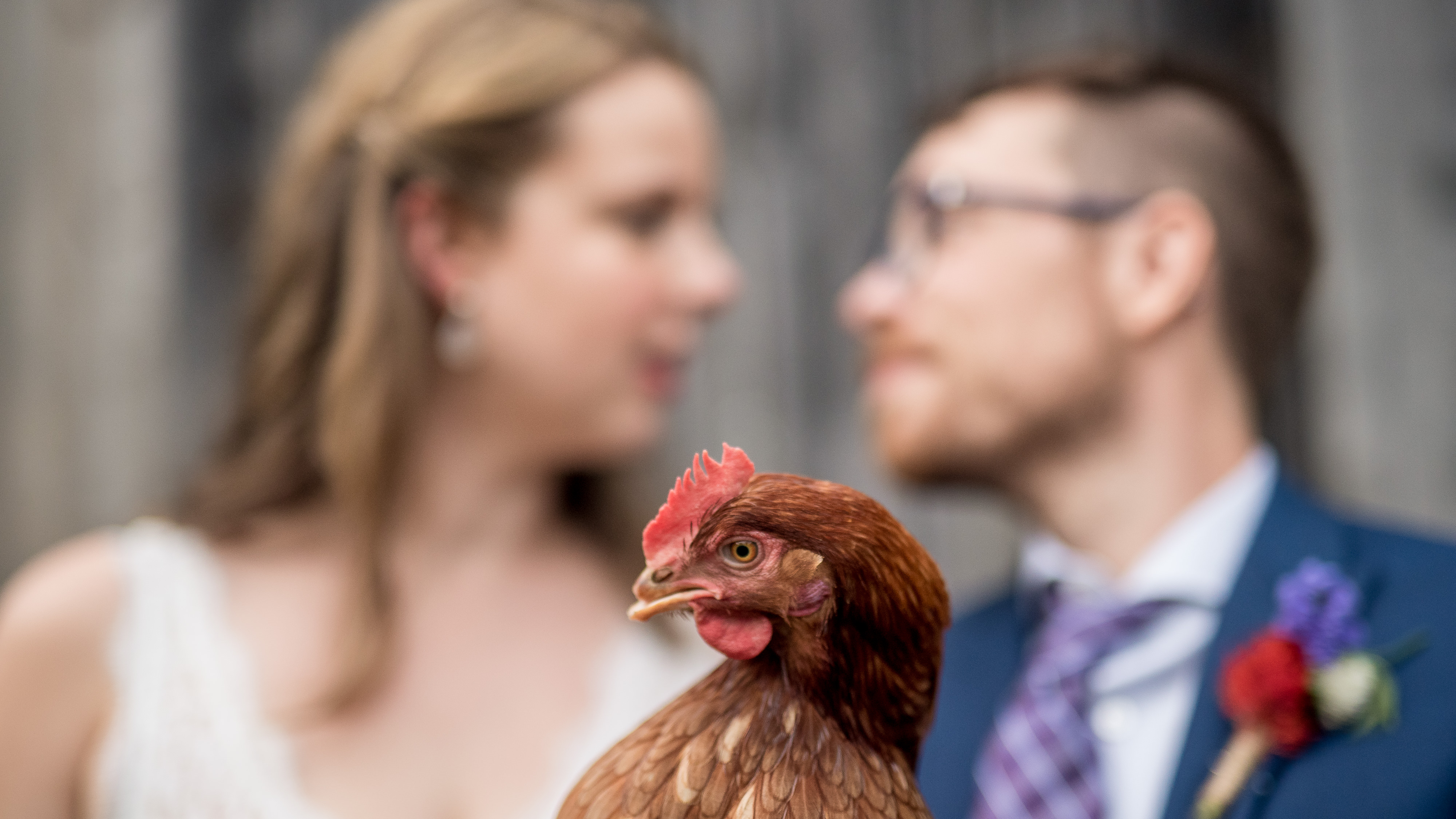 Hilarious chicken farm wedding photos