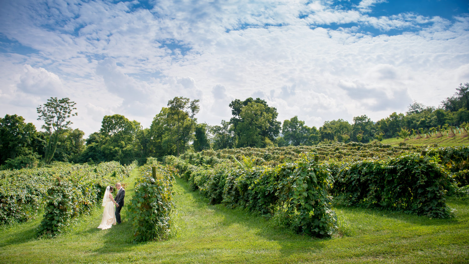 Virginia Winery Wedding Photography