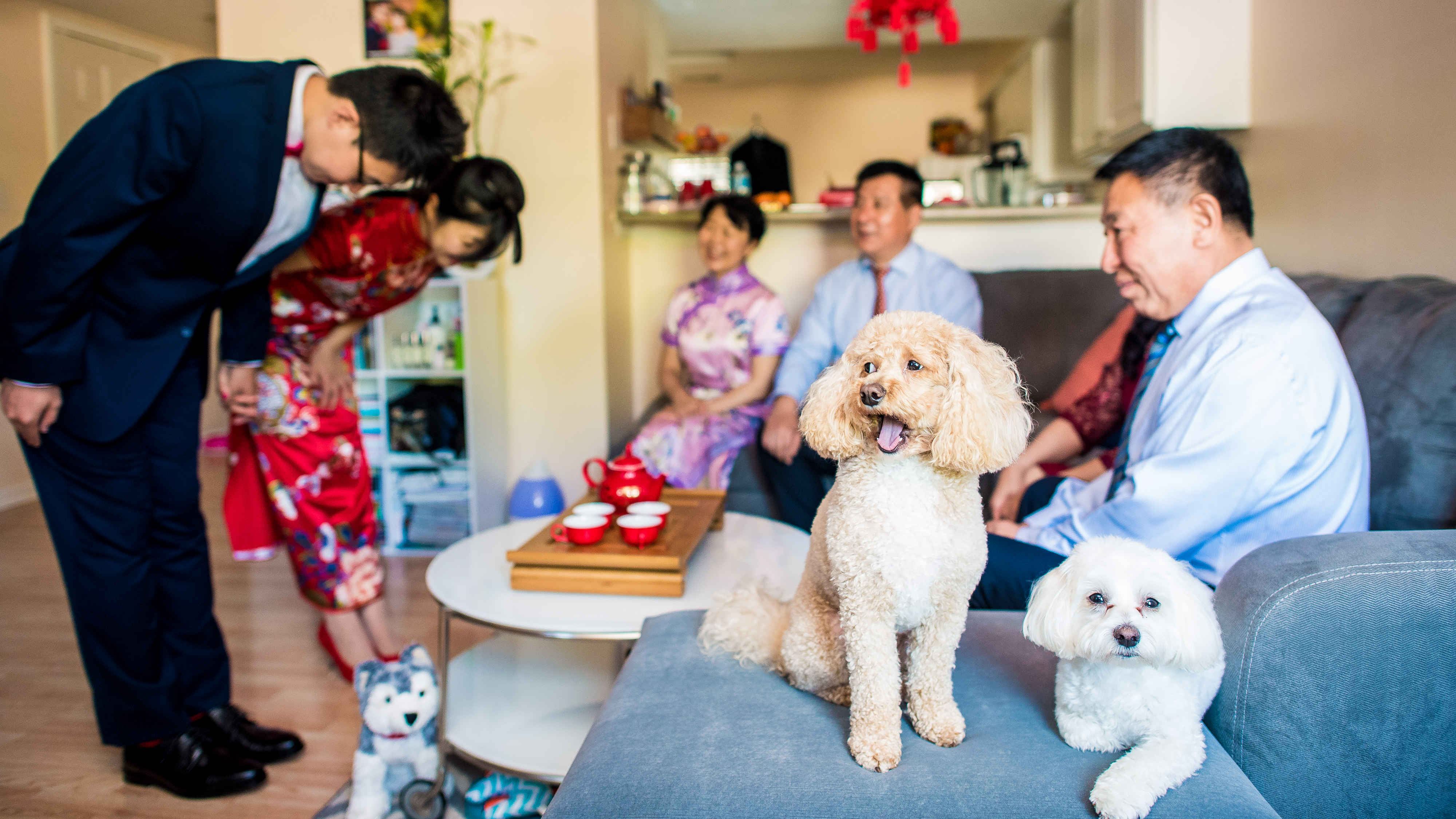 Chinese Tea Ceremony Wedding Photography with cute dogs
