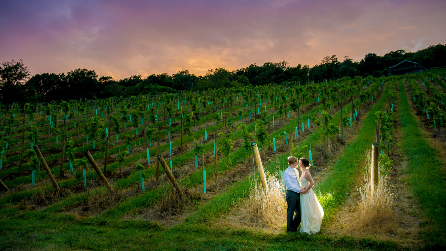Virginia Winery Wedding Photos