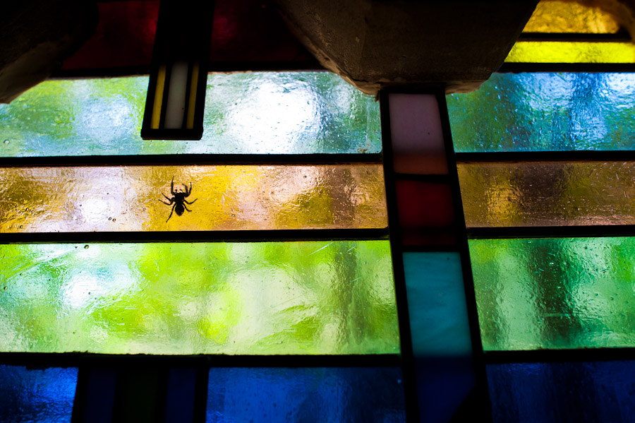 spider on stained glass
