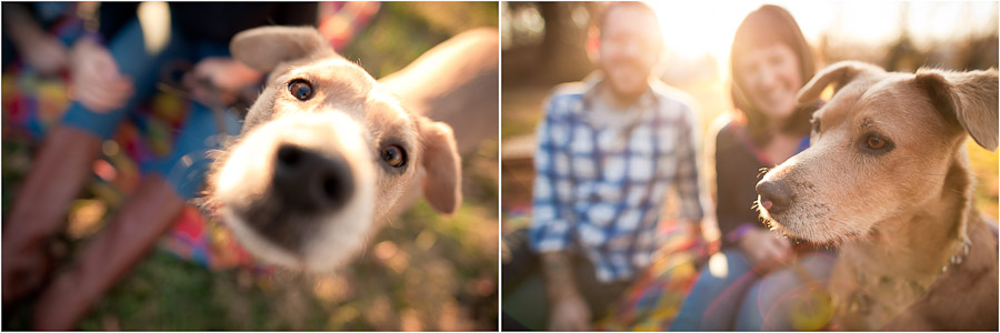 Funny dog engagement photography