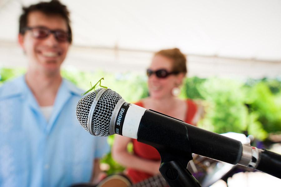 Praying Mantis on Microphone