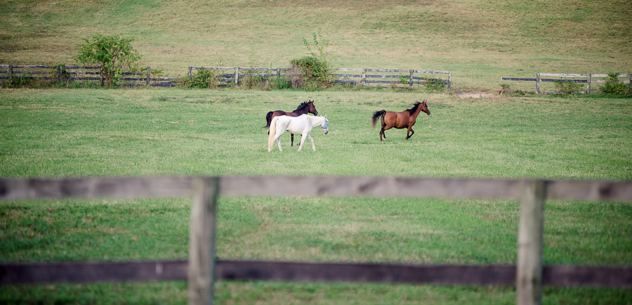 Horses running at outdoor, picnic wedding at Gingerwoods