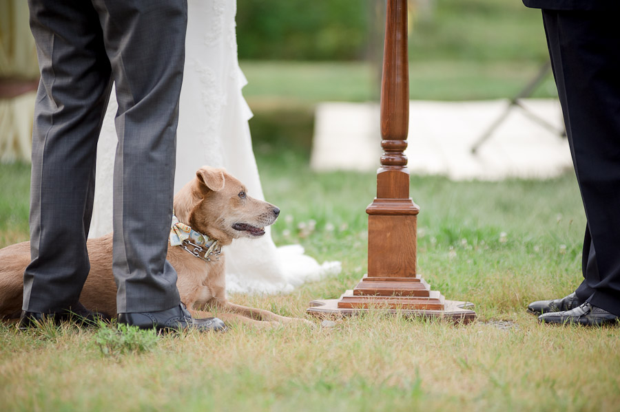 Cute and funny dog best man at outdoor wedding in Louisville