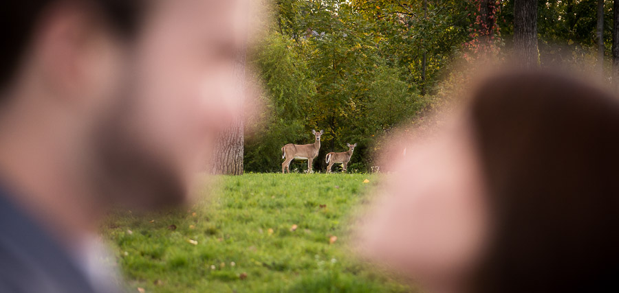 Funny photo of deer and couple in Bloomington, IN