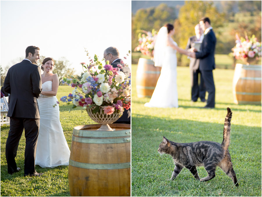 Hilarious ceremony moment with cat at King Family Vineyard wedding photograph