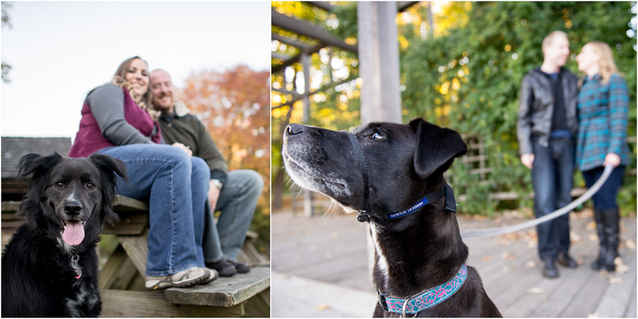 fun dogs at engagement sessions