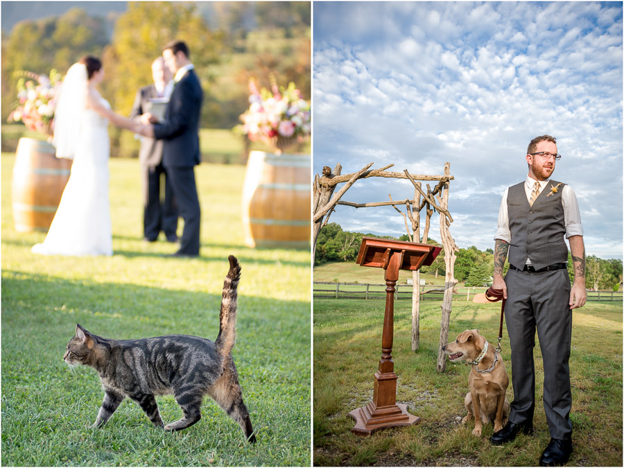 dogs and cats in wedding ceremonies