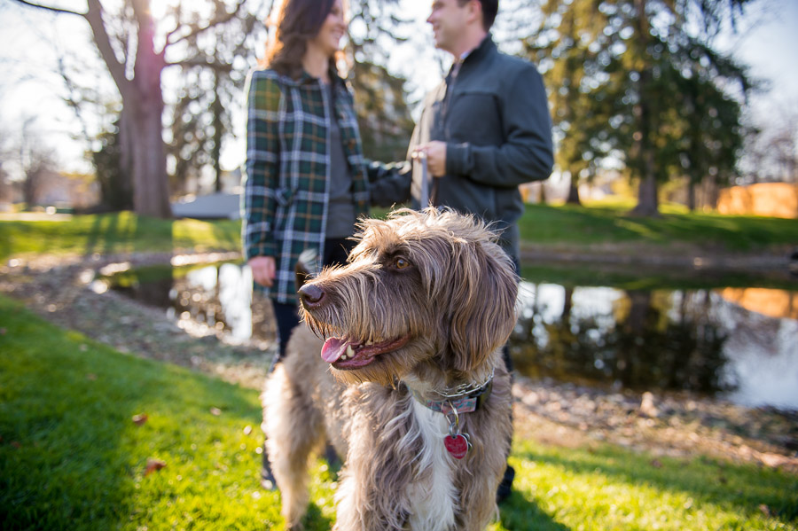 Awesome shaggy dog in engagement photo