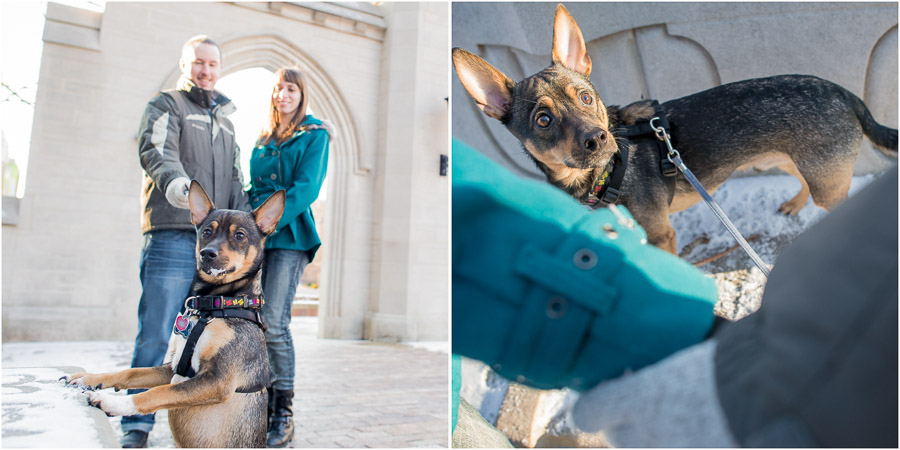 Indiana University Engagement Pics with Pet Dogs!