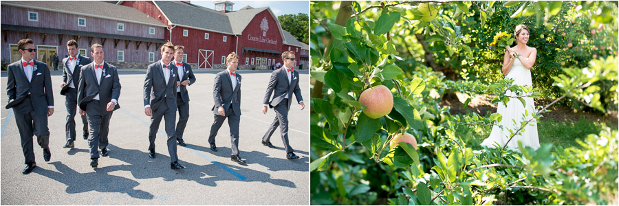 candid groomsmen photo and bride in apple orchard at County Line Orchard