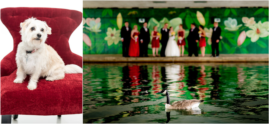Bloomington-Harrisonburg-Wedding-Photographers-Best-Of-2015-44